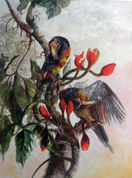 2 Toucans